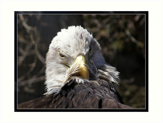 I have an itch by Cheryl Dunning