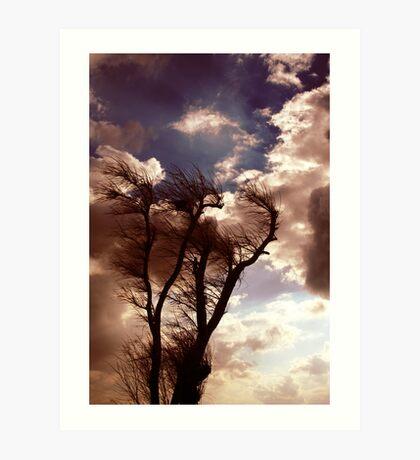 Windtree Art Print