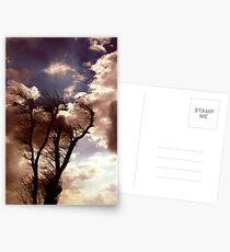 Windtree Postcards