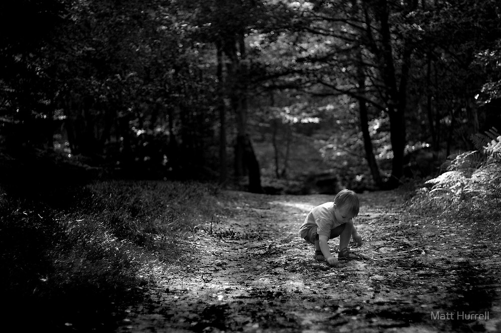 If you go down to the woods today... by Matt Hurrell