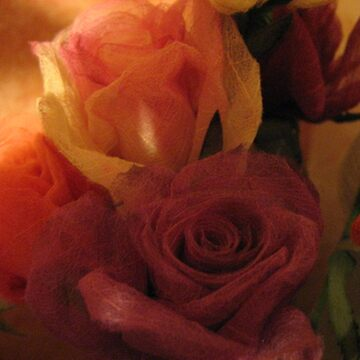 Roses  by men4breakfast