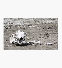 Death in a Dead Lake. The Stark reality of Climate Change, Tanzania Photographic Print