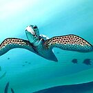 A Sea Turtle by AlanZinn