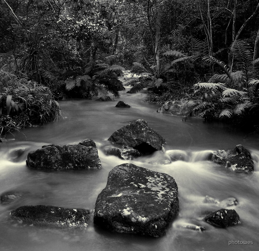 Stream through a forest. by photowes