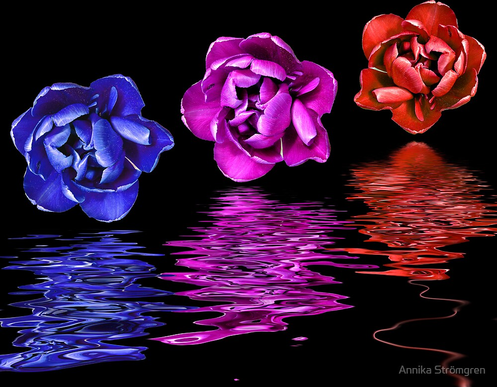 Floating tulips by Annika Strömgren