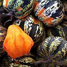 PA Pumpkins by tachamot
