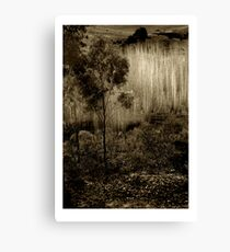 Poplars near Vaughan Canvas Print
