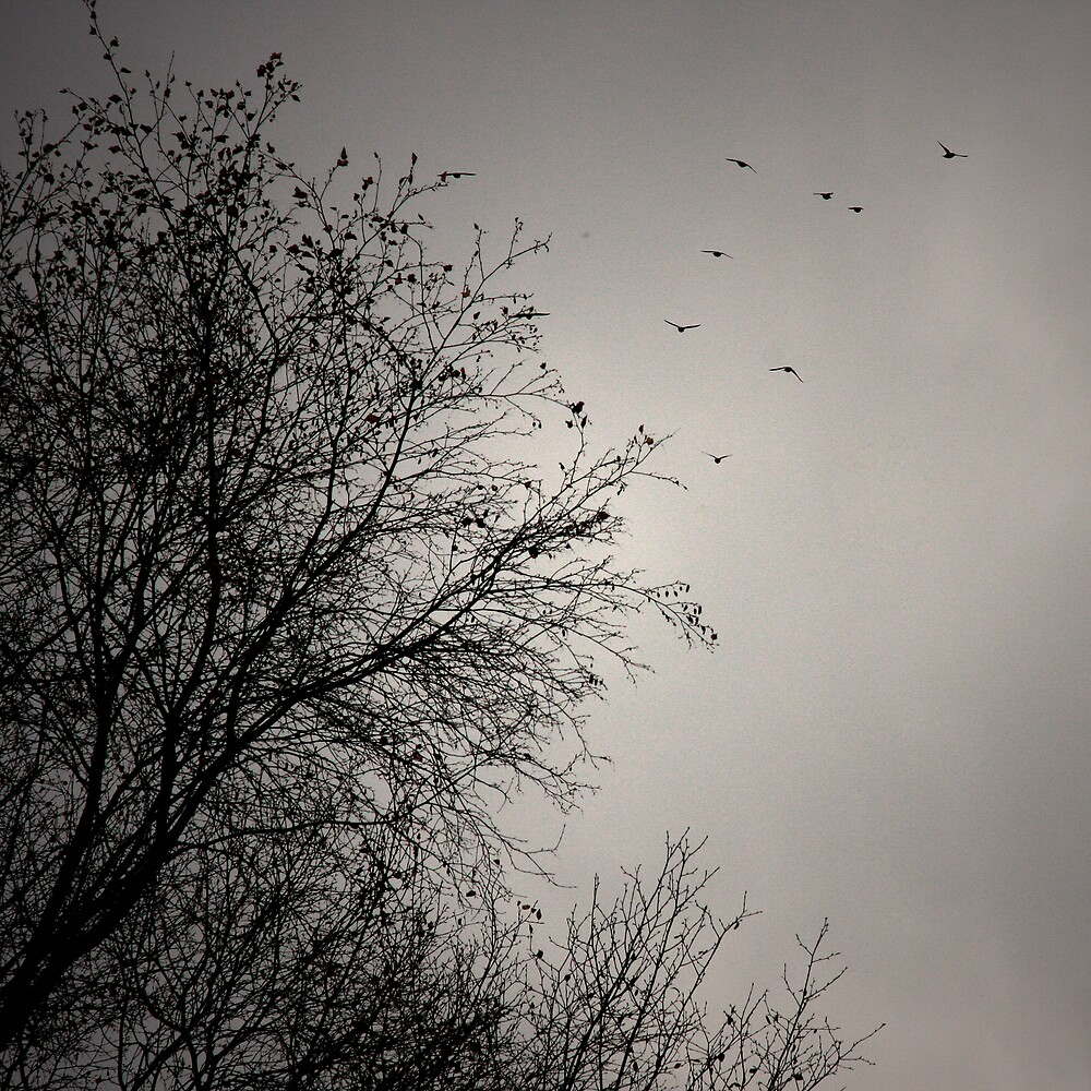 Migration by arctoa