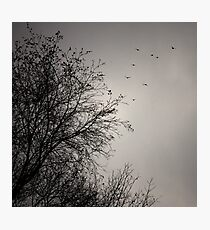 Migration Photographic Print