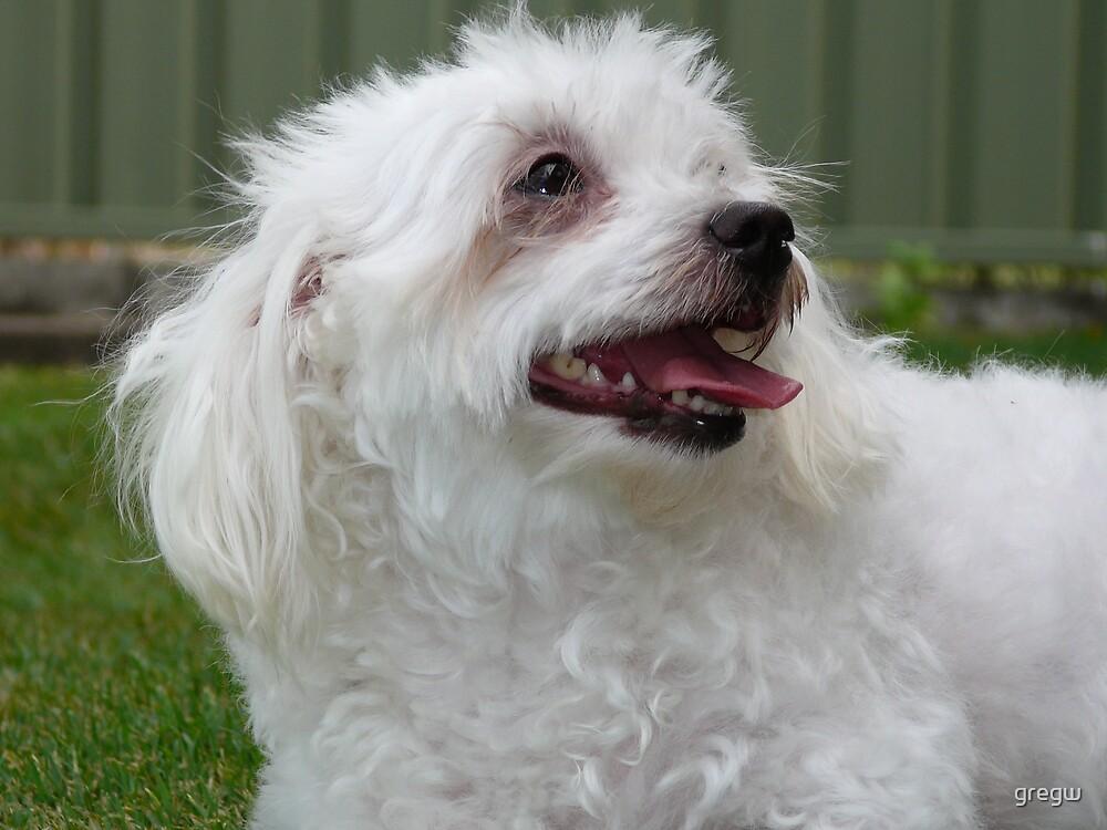 Bella the Dog! by gregw