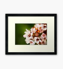 Macro flowers, floral, nature photography Framed Print
