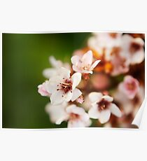 Macro flowers, floral, nature photography Poster