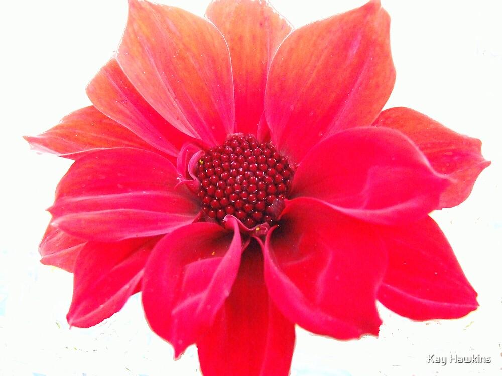 Winter Flower by Kay Hawkins