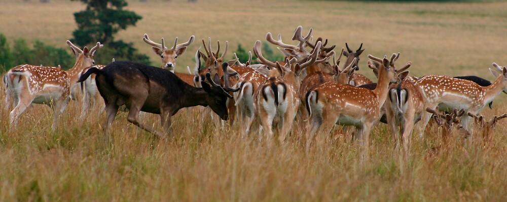 Deer - Surry by gematrium