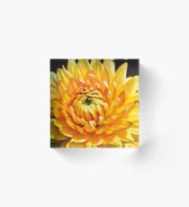 Bright Yellow Chrysanthemum Acrylic Block