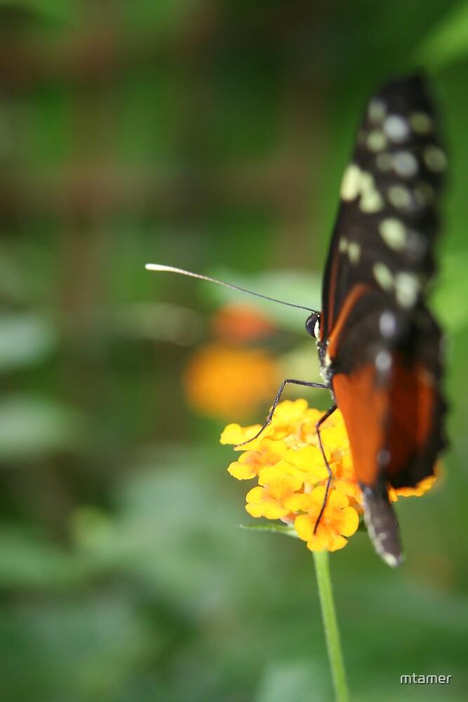Flutterby Feeding by mtamer