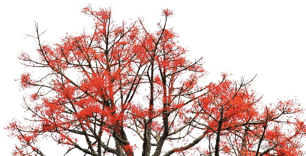 firetree by A Space in Time