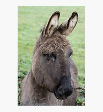 Donkey Picture/Poster Photographic Print