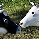 2 cows by Kurt  Tutschek
