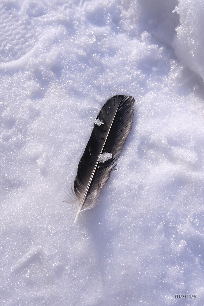 Snow feather by mtamer
