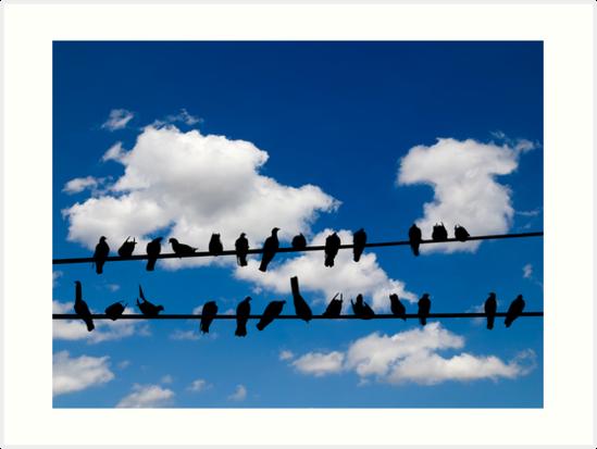 Birds on a wire by Kurt  Tutschek