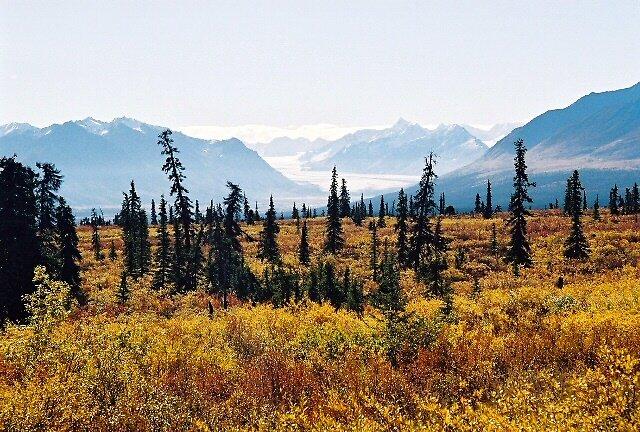 Wild Alaska  by Amber Carter