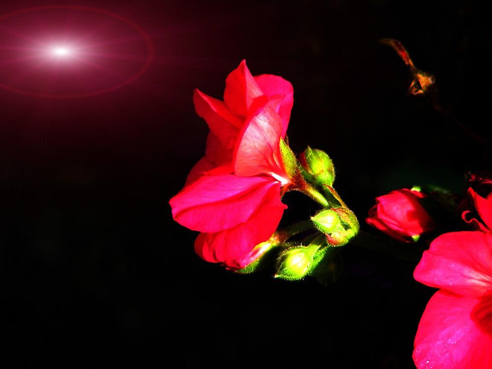 beauty in the night by ashleymaiwoo