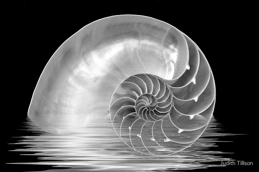Nautilus Rising by Judith Tillson
