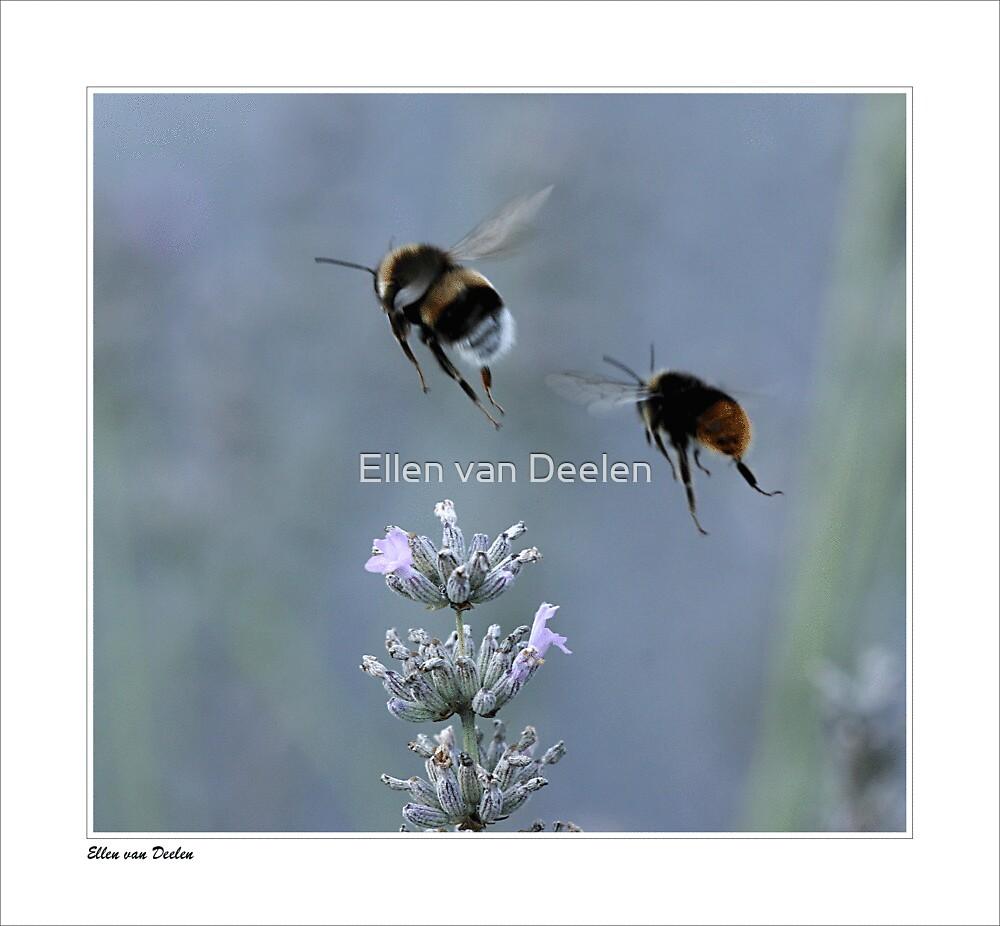 Flying... by Ellen van Deelen