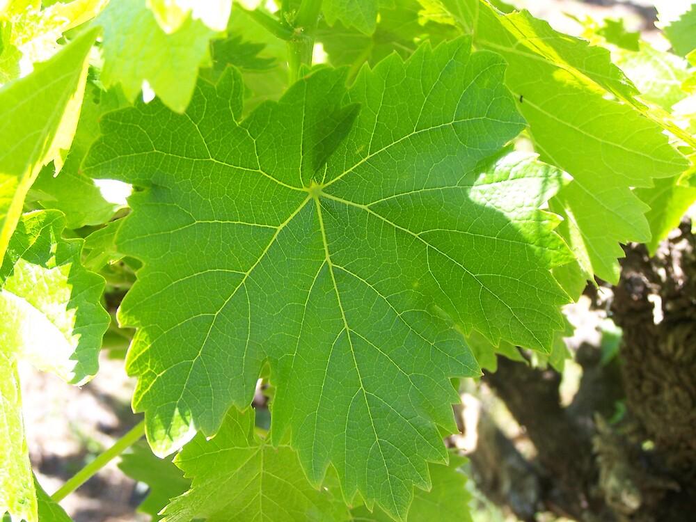 vines by Princessbren2006