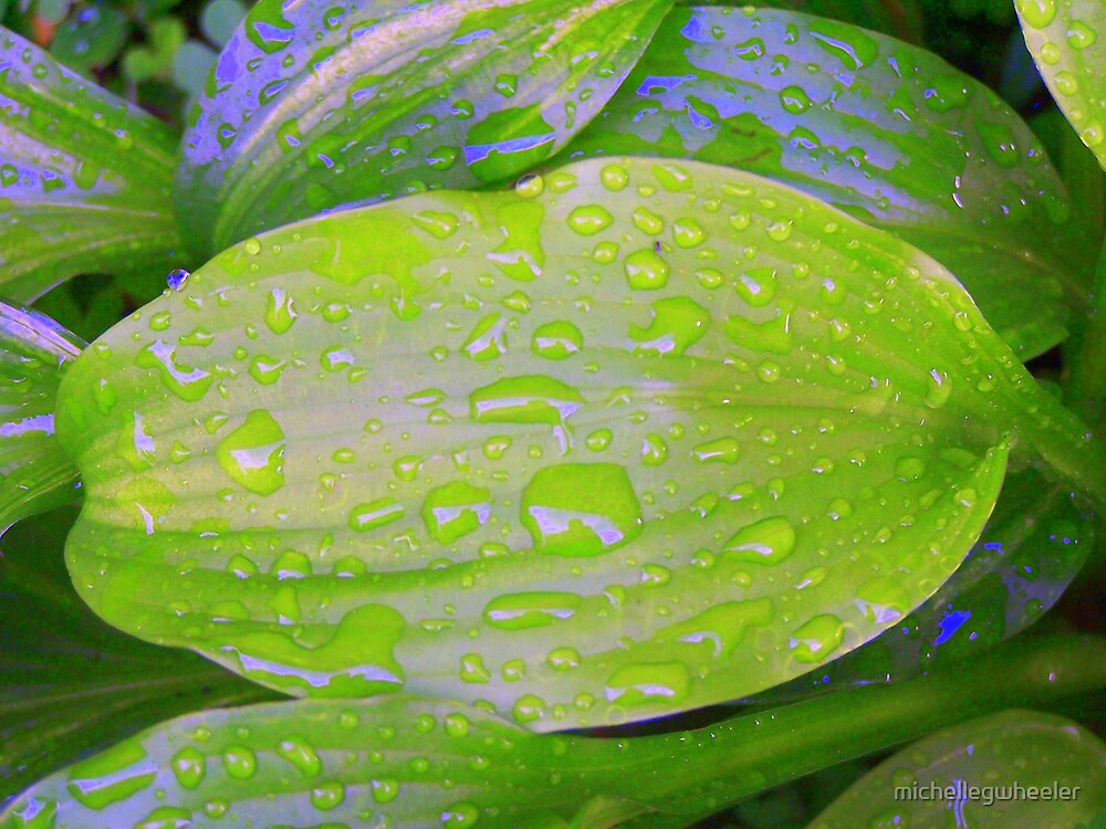 Rain On Hosta by michellegwheeler