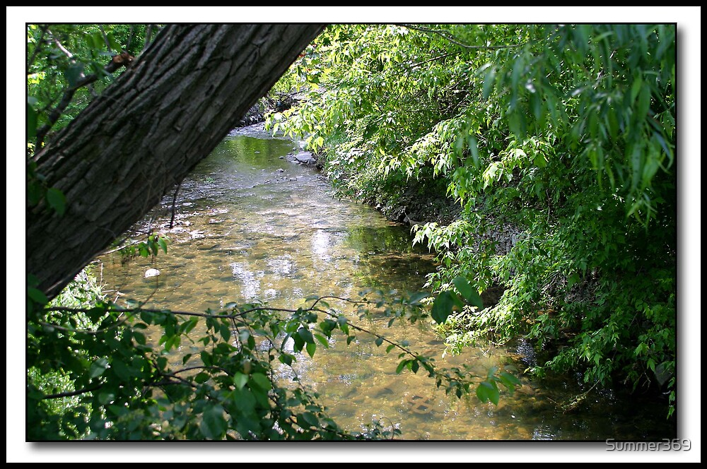 Park Stream by Summer369