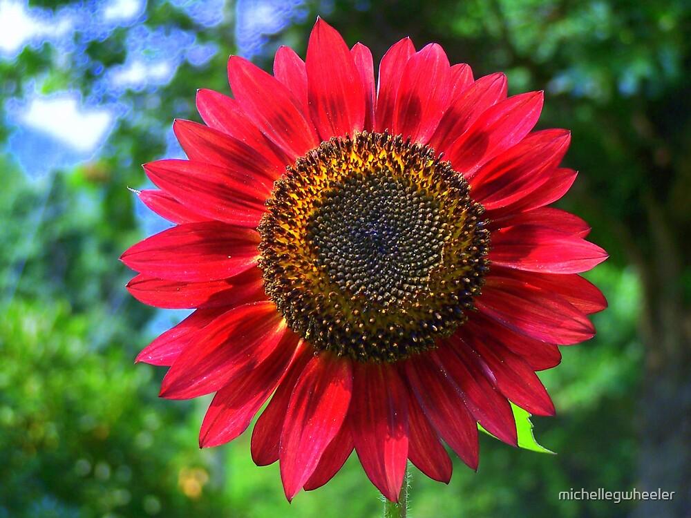 Reddest Sunflower by michellegwheeler