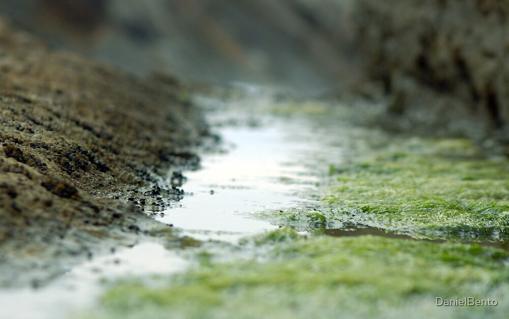 grass of sea by DanielBento