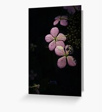 Life in the Dark Greeting Card