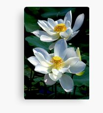 White Lotus's Canvas Print