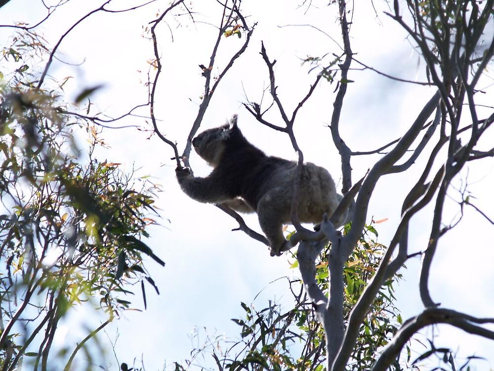 Koala in the wild by wildflowers