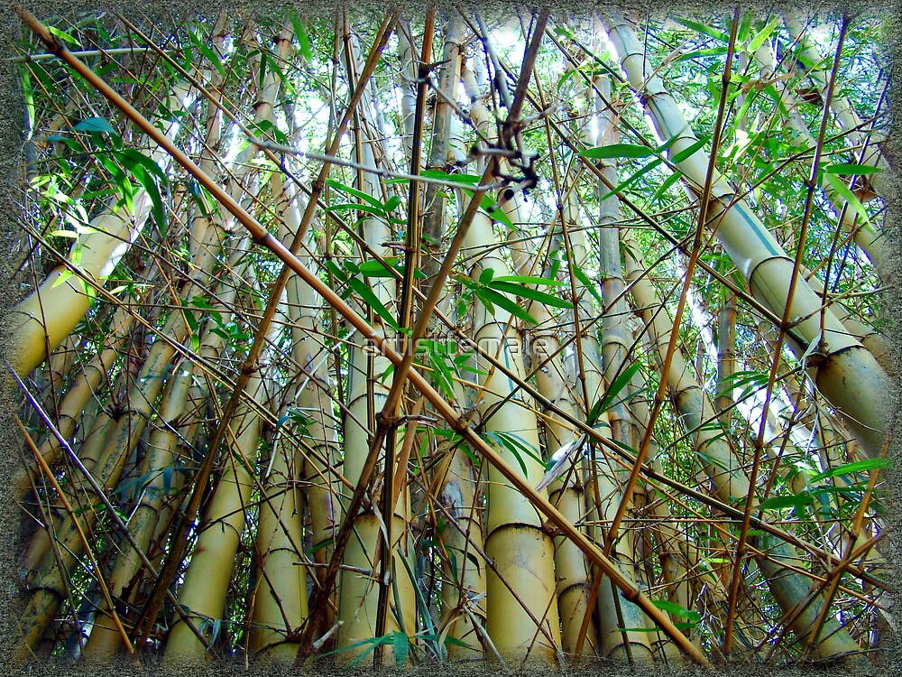 Bamboo Two by artistfemale