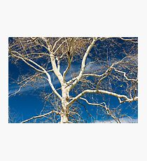 Branches and sky Photographic Print