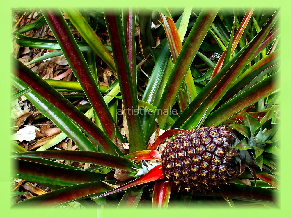 Pineapple by artistfemale
