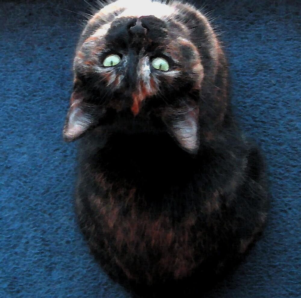 Calico Upside Down by nikspix