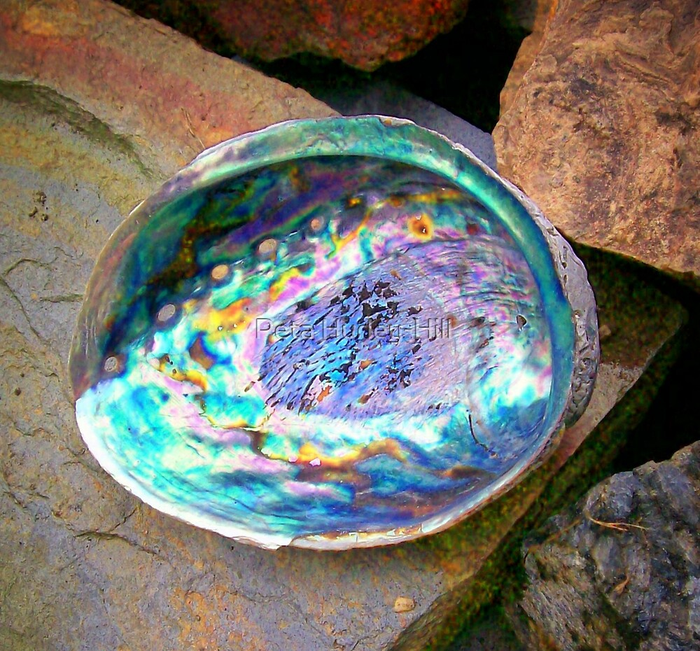 abalone 1 by Peta Hurley-Hill