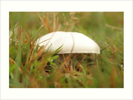 mushroom by larga
