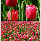 Floriade by Mazy