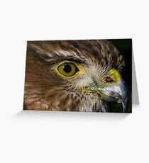 Sharp Shinned Hawk (juvenile) Greeting Card