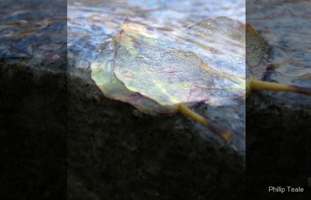 Leaf by Philip Teale