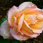 Just Peachy by Sharon Perrett