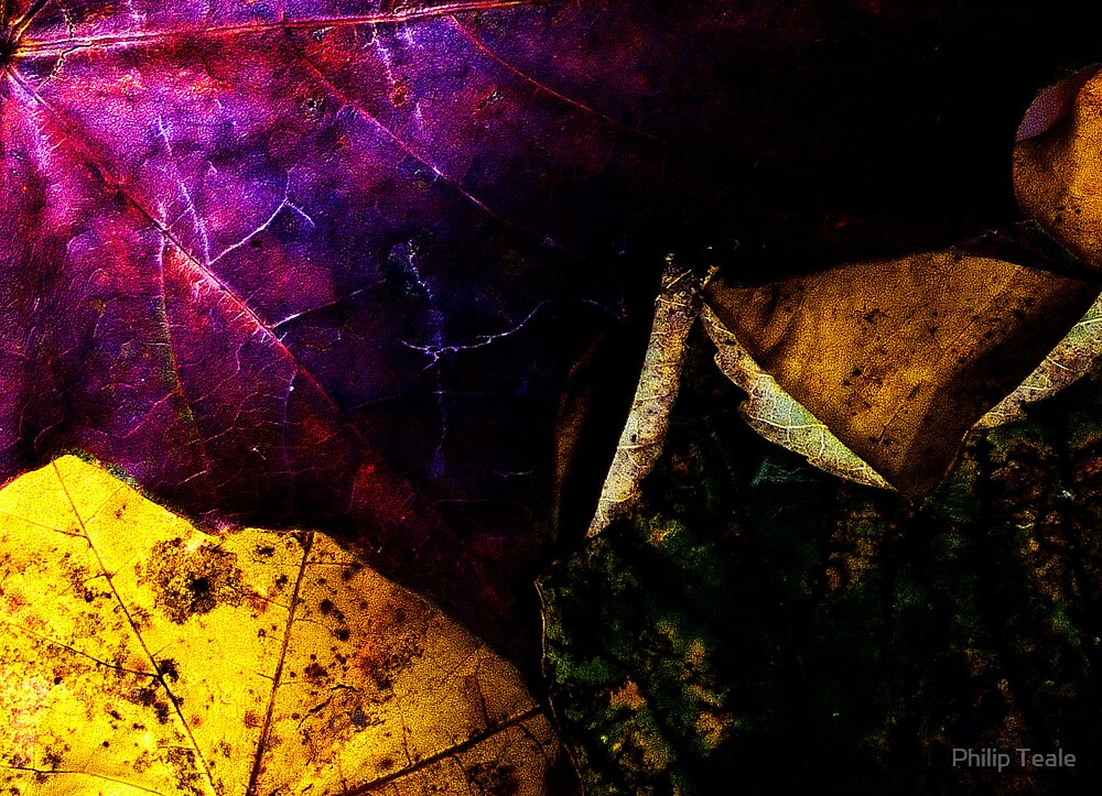 Leaves by Philip Teale