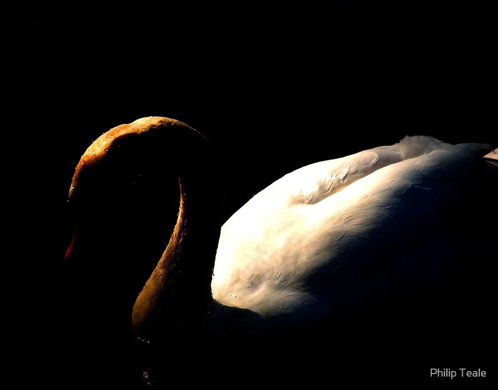Swan 2 by Philip Teale