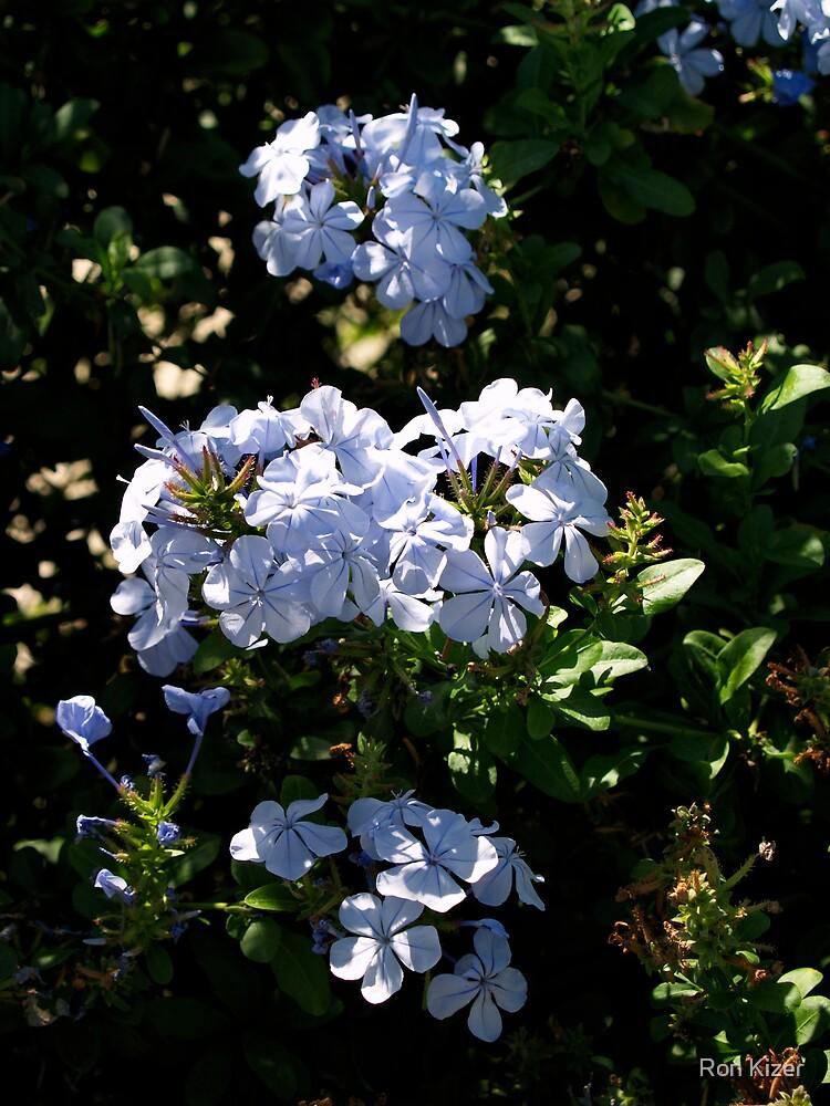 Blue Bouquet   by Ron Kizer